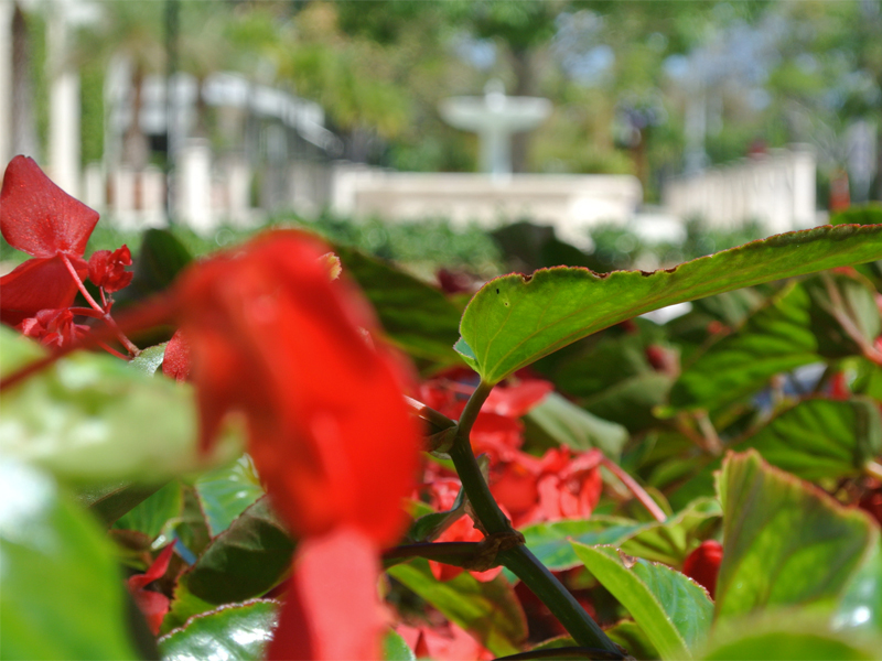 Royal Palm Beach Florida Residential Landscape and Maintenance