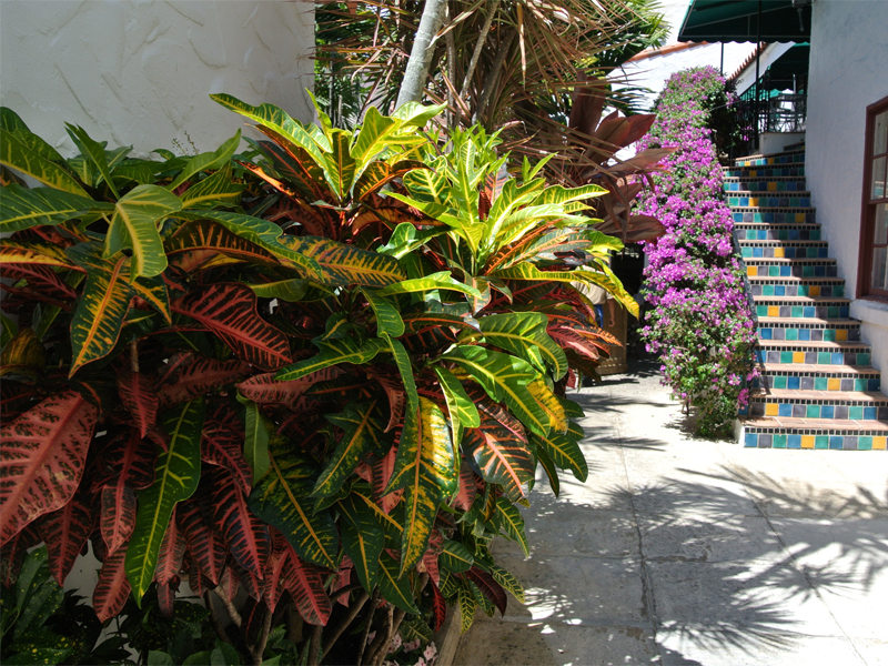 Residential Landscaping Company In Palm Beach Gardens Florida