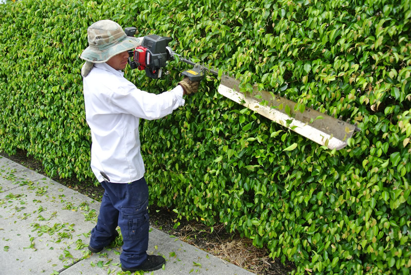 Licensed and Insured OHara Landscape Maintenance West Palm