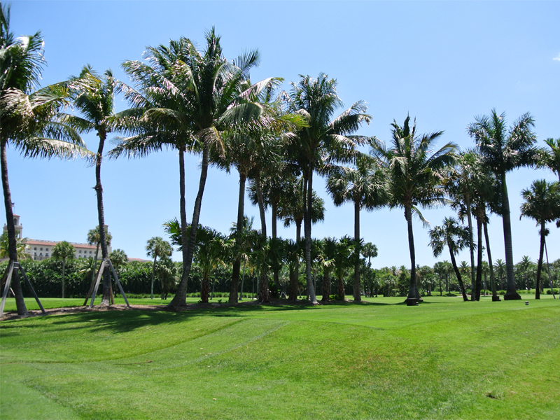 Boca Raton Residential Landscape and Maintenance